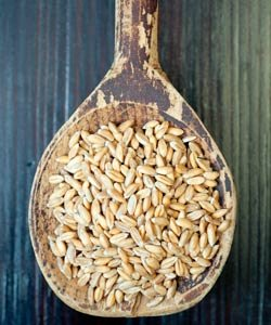 Cereal de espelta en grano