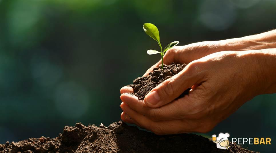 envases biodegradables y compostables