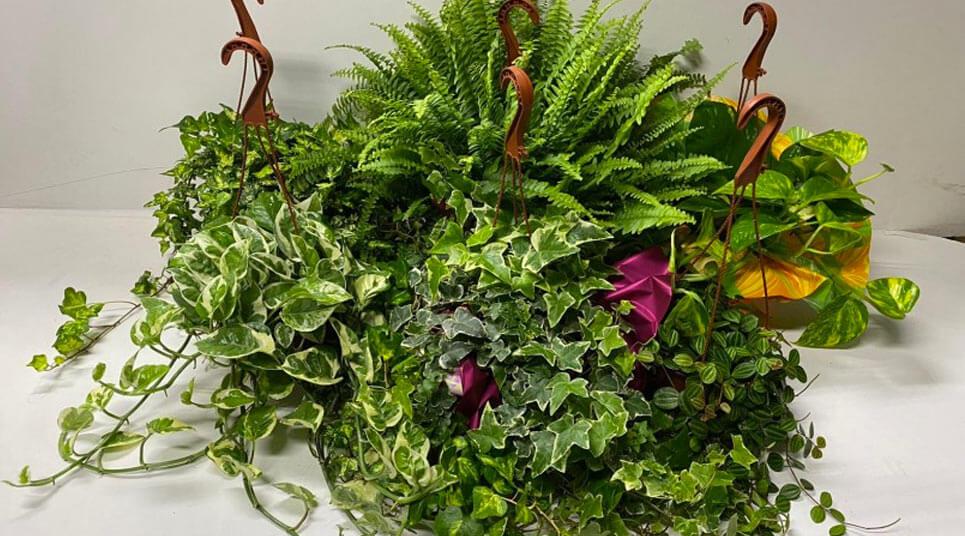 pack de plantas