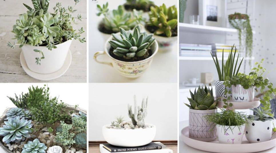 plantas centro de mesa