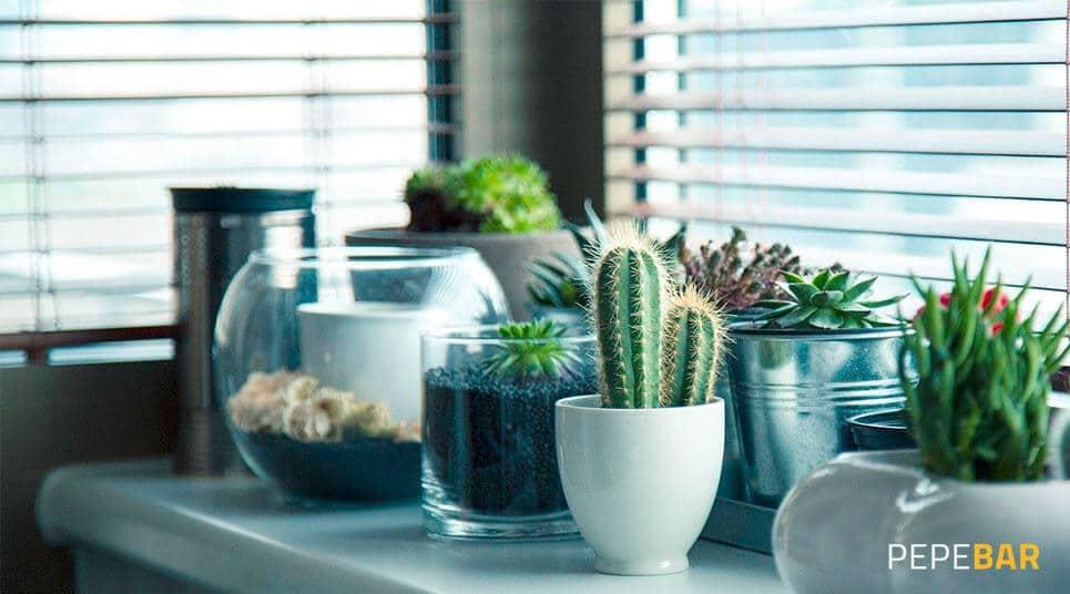 plantas decorar local hosteleria